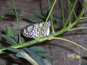 Butterfly Pavilion in Branson