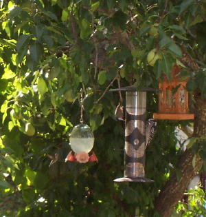 hummingbird, chickadee and woodpecker