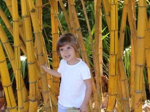 ava-bamboo