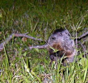 groundhog-42